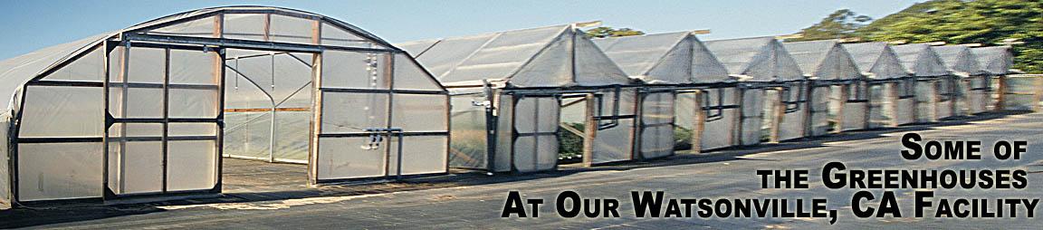 Santa Cruz Olive Tree Nursery Contact Us